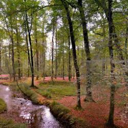 Forêt du Cranou
