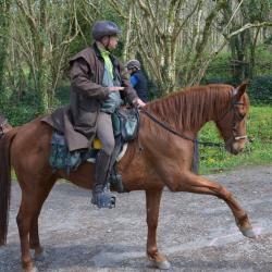 Monts d'Arrée - Un cheval ... très patient